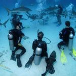 Scuba Dive Bahamas